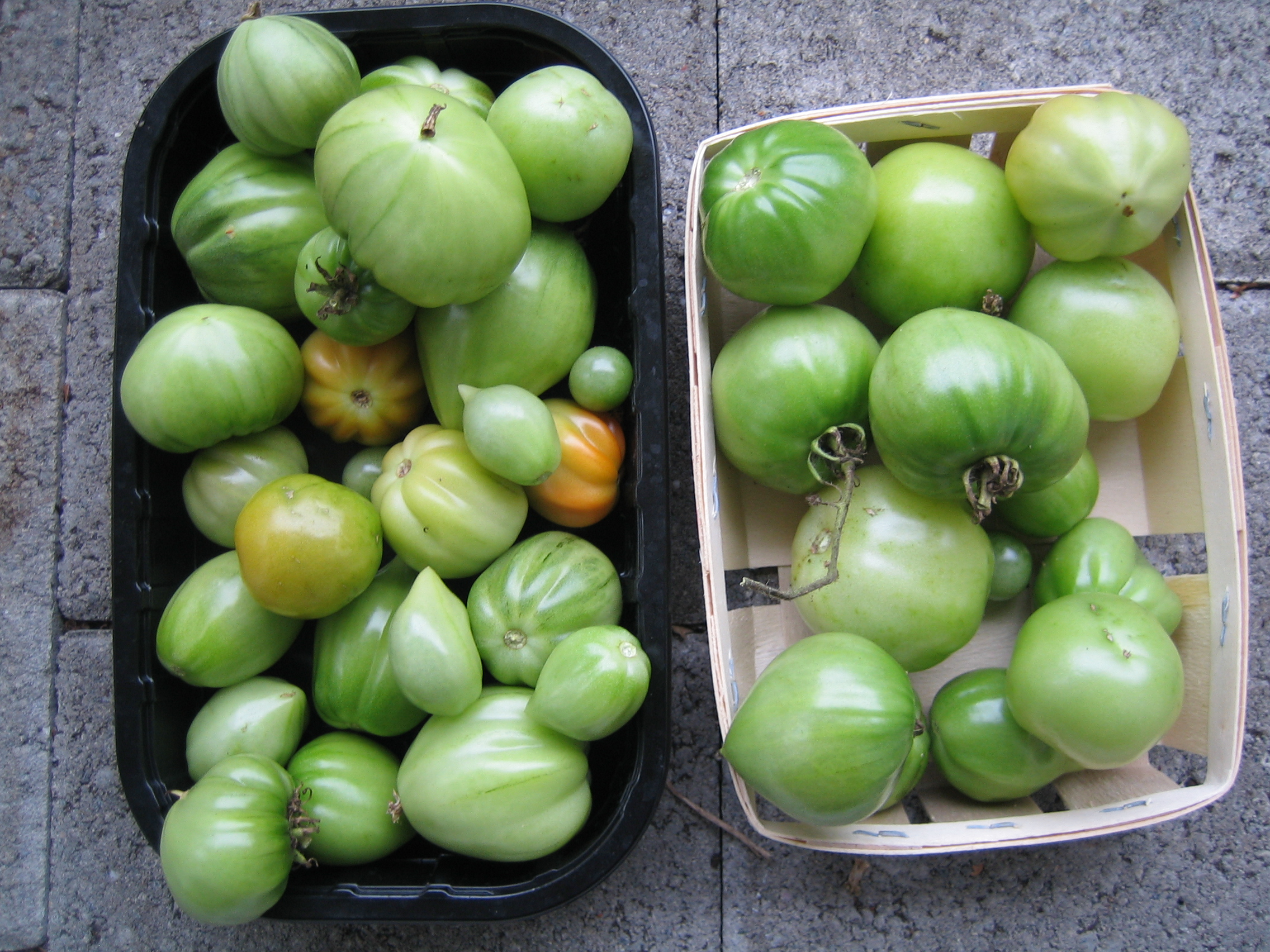 (Deutsch) my urban farming – Tomatenherbst